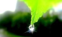 Итоги недели экологии «Зеленая планета»